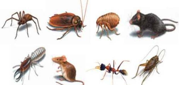 شركة مكافحة الحشرات الشارقة