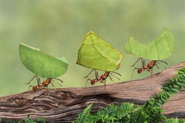 شركة مكافحة النمل الشارقة